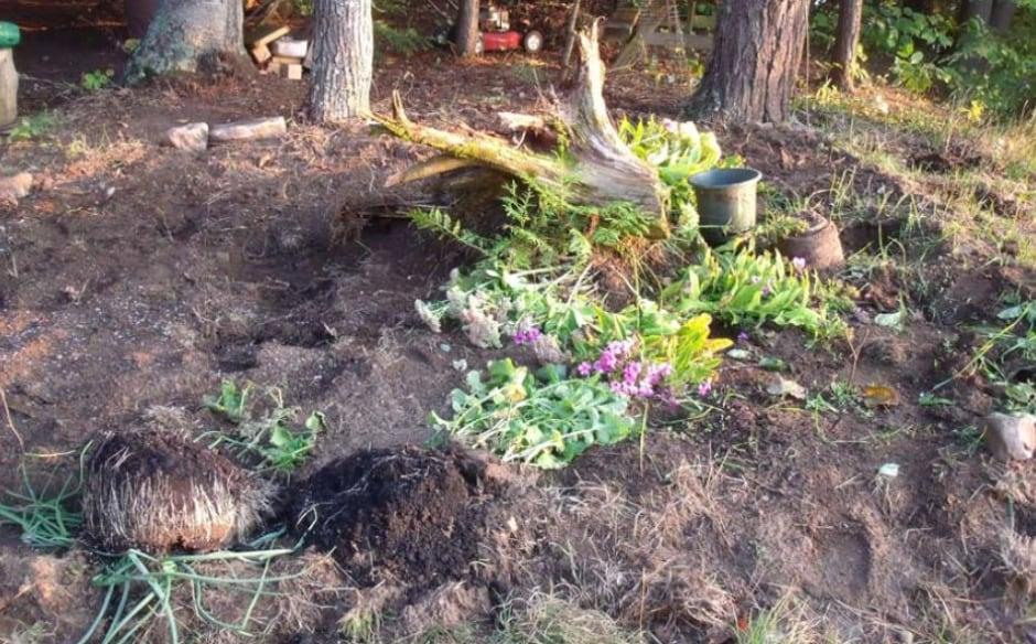 Carol Culleton thumb drive photos plants torn up