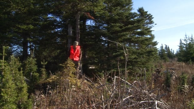 Kirk in the woods searching for cougars
