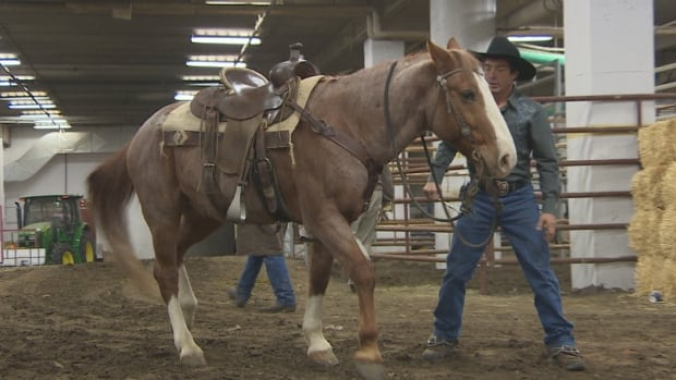 Trainer Tommie Turvey works with his horse Blade, which appeared on the first episode of The Walking Dead.