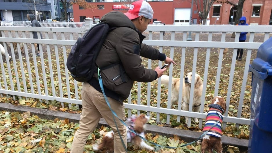 Dogs interact while out for a walk at an off-leash dog area in Toronto's Clarence Square Park.
