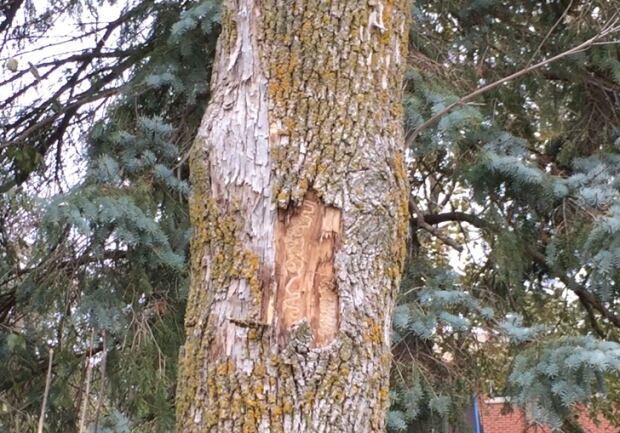 Tree Removal Kitchener Waterloo