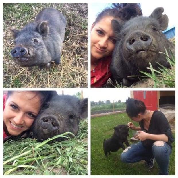 Pickles and Rosie pigs shot Nov 28