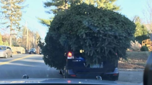 Clark Griswold Lives: Cops stop driver with huge tree hooked on roof