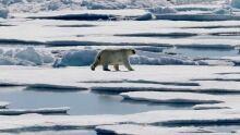 Climate Denial Blogs polar bear