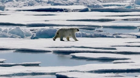 Climate Denial Blogs polar bear