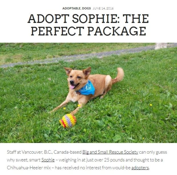 Sophie The Perfect Package
