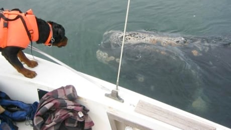 Whale tracking dog