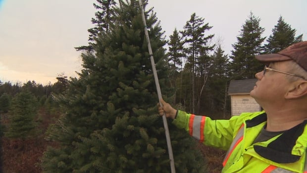 Christmas tree shortage? Wholesalers in Nova Scotia sell out for ...