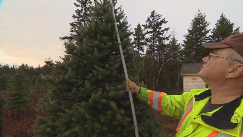 Shortage Of Christmas Trees 2019 Christmas tree shortage? Wholesalers in Nova Scotia sell out for