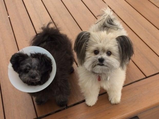Cinder and sibling