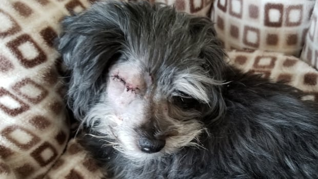 Scruffy lost her eye after she was attacked by an owl in Terwillegar on Saturday night.