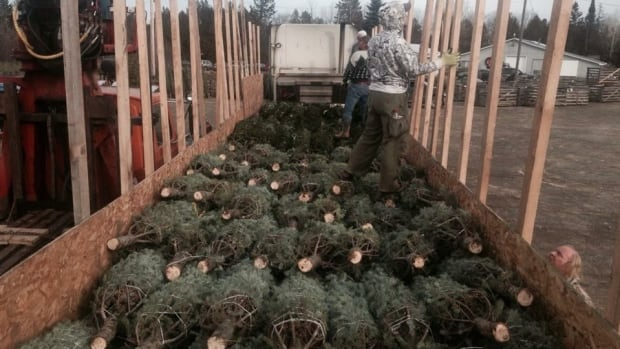 This year, Adam Stone has sold more Christmas trees to the United-States and to Alberta and British Columbia.