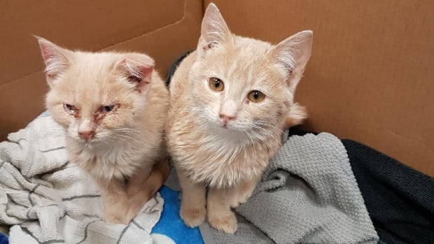 The two kittens — a male and female — were found nearly frozen on Monday night.
