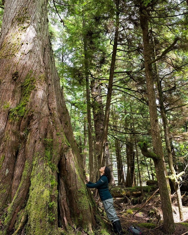 Much Of The Remaining Old Growth Forests In British Columbia Fall Into Parks And Protected Areas Will Never Be Logged Andrew S Wright Canada