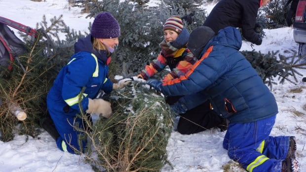 People tie up a free Christmas tree that they cut down in a handout photo from the Nature Conservancy of Canada. The trees aren't native to the area where they are growing.