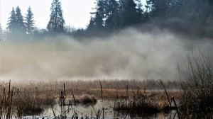 Mist at Beaver Lake