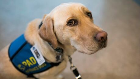Hospital lab sniffs out stress, prescribes 'unconditional love'