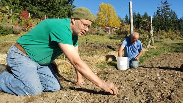 Pegg planting garlic with Jason