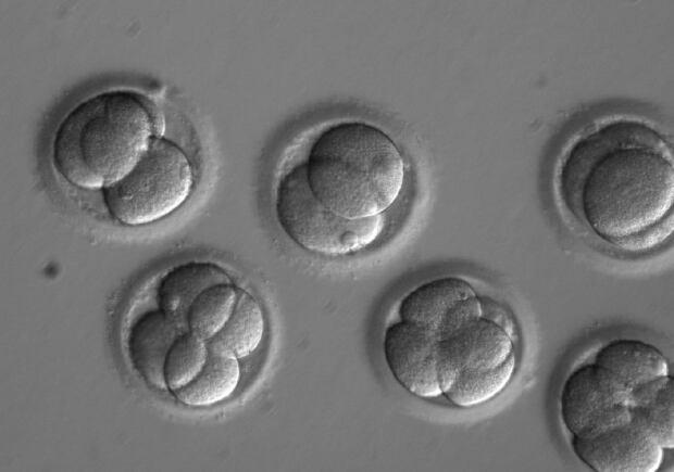 Edited human embryos developing into blastocysts