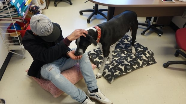 how to get a therapy dog ottawa