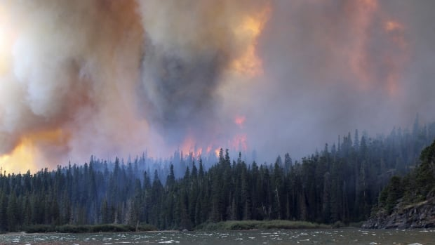 The Reynolds Creek Wildland Fire burns in Glacier National Park, Montana in this photo taken July 21, 2015. The new U.S. study counted seedlings at 1,500 forest sites in the Rocky Mountains affected by 52 wildfires in five states in the U.S. Rockies between 1985 and 2015.