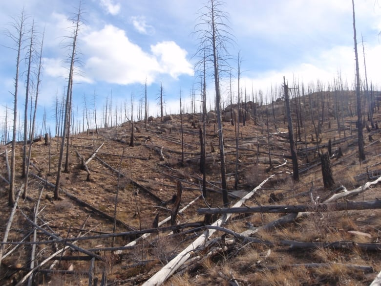 Some forests aren't growing back after wildfires, research finds