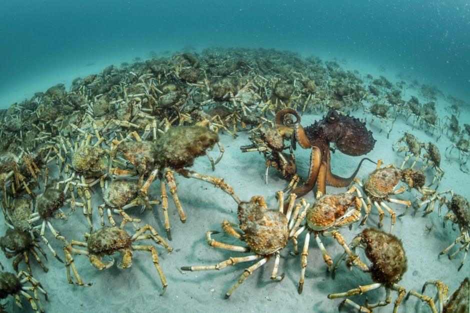 Crab surprise © Justin Gilligan - Wildlife Photographer of the Year.jpg