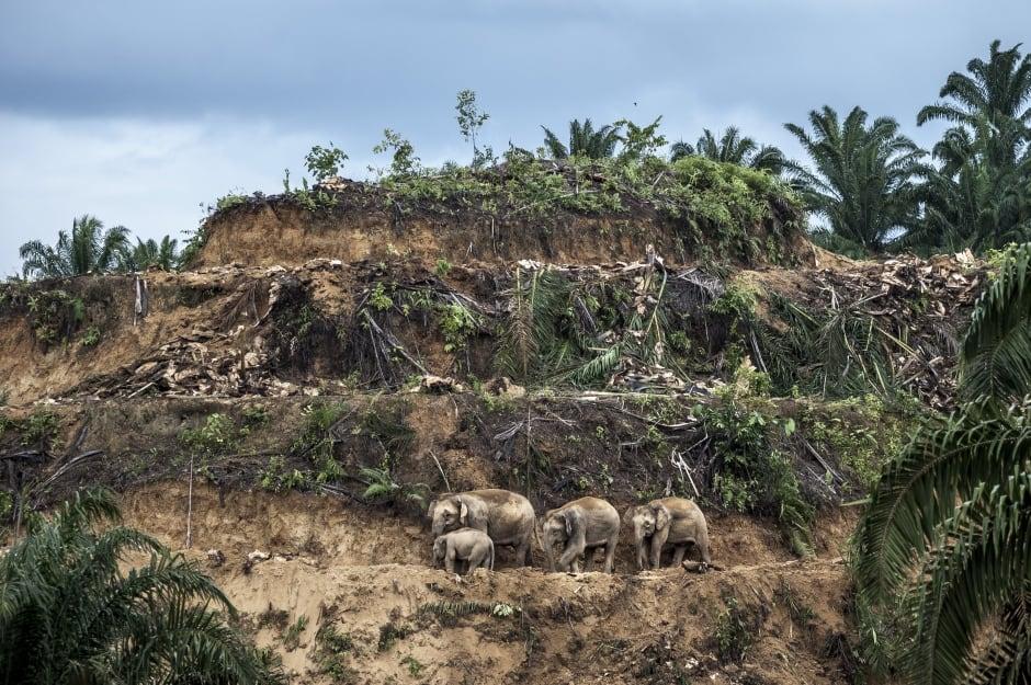 Palm-oil survivors © Aaron Gekoski - Wildlife Photographer of the Year.jpg