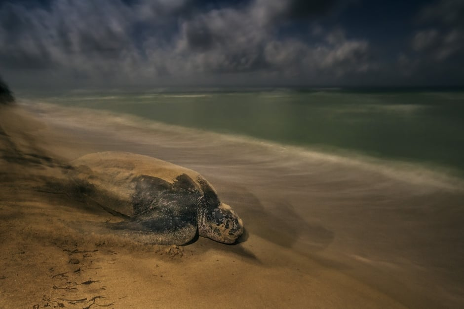 The ancient ritual © Brian Skerry - Wildlife Photographer of the Year