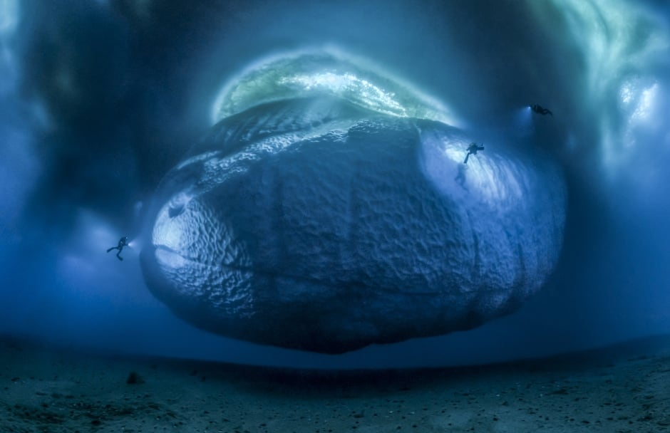 The ice monster © Laurent Ballesta - Wildlife Photographer of the Year
