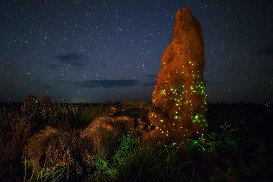 The night raider © Marcio Cabral - Wildlife Photographer of the Year