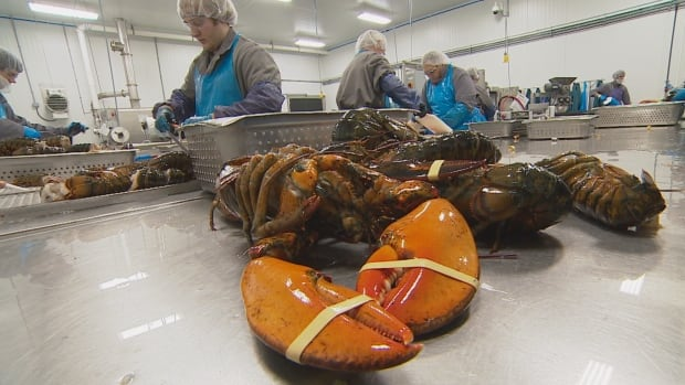 Members of the U.S. lobster industry, which is based in New England, said exports to Europe have been pretty typical this year, but they're worried about the future.
