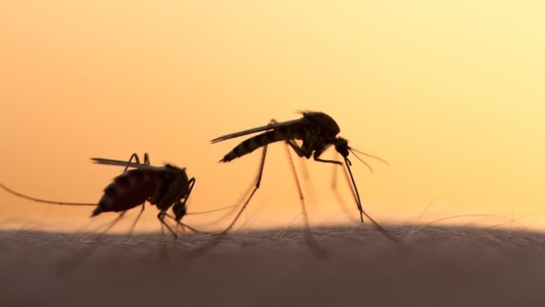 What you can do to keep the mosquitoes away this summer