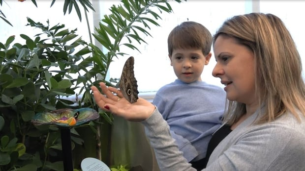 Close encounters with butterflies at the Canadian Museum of Nature