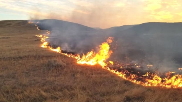 This grass fire started on CFB Suffield in southeastern Alberta on Sept. 11, 2017, then spread beyond the military base. It burned an estimated 36,500 hectares — nearly half the size of Calgary.