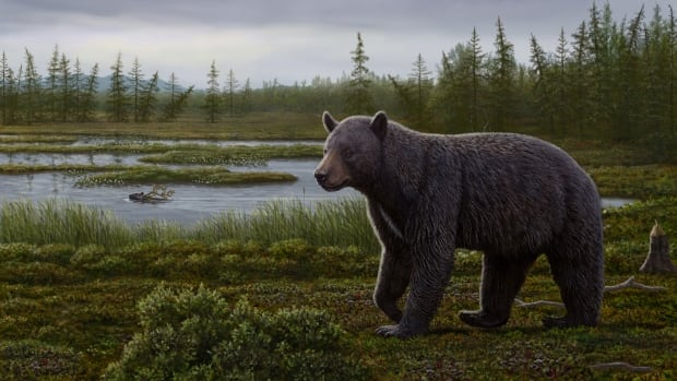 An artist's reconstruction shows Protarctos abstrusus in the Beaver Pond site area during the late summer. An extinct beaver, Dipoides, is shown carrying a tree branch in water. Plants include black crowberry with ripened berries, dwarf birch in foreground, sedges in water margins, and larch trees in background.