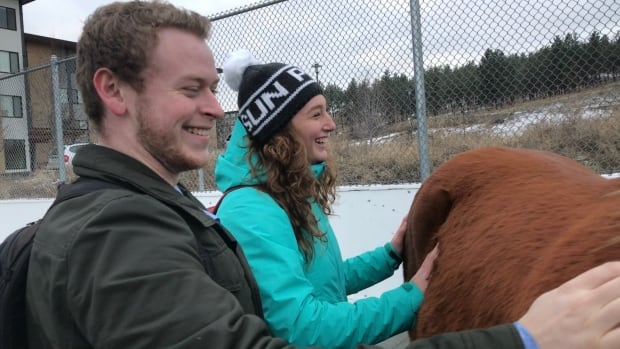 Students with therapy horses at UBC Okanagan