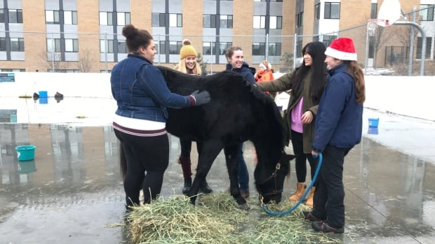 Students at UBCO with a therapy horse
