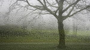 Joint pain? Don't blame it on the rain