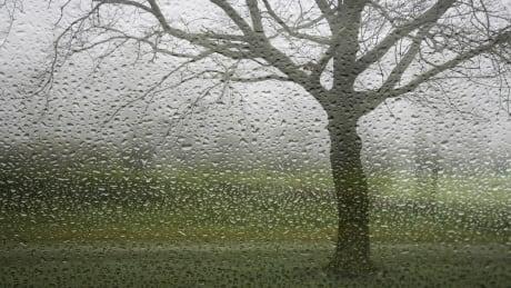 Tree outside rainy window