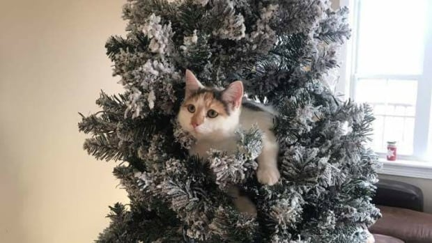 Free ways to get rid of your Christmas tree in New Brunswick - New ...