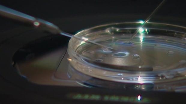 IVF petri dish