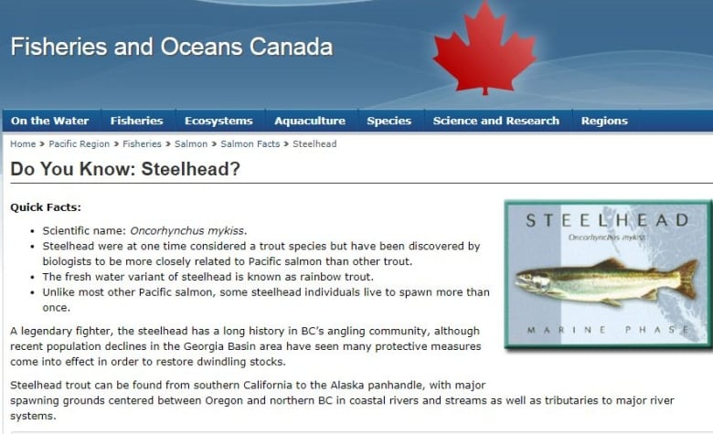 Salmon or trout: What the heck is a steelhead, anyway? | CBC