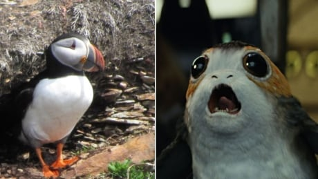 star wars puffin porg