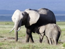 elephants in the wild **only use for this doc