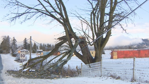 Fraser Valley power outages: hydro crews making progress