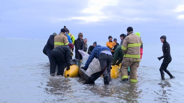 Rescuers use an inflatable raft to help get the whale out to sea.