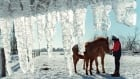 ICE STORM north gower ryan daly horses 1998 ottawa