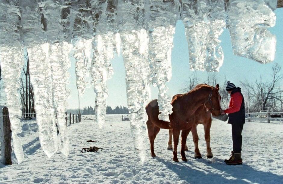 ICE STORM north gower ryan daly horses 1998 ottawa
