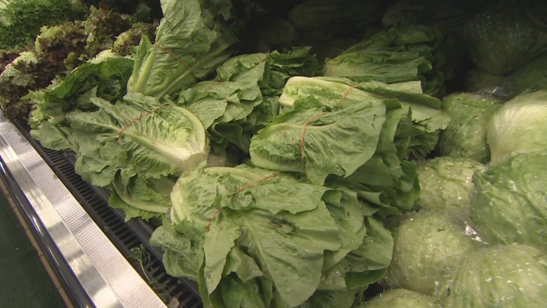 Everything You Need To Know About The E Coli Risk From Romaine
